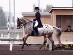 Horse Trainer Redmond, WA