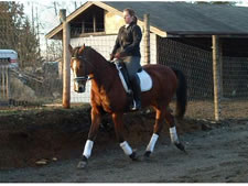 Debby Martin Horse Trainer