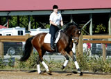Dressage Training Lessons Redmond